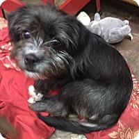 Adopt A Pet :: Gretchen-pending adoption - Manchester, CT