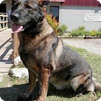 Adopt A Pet :: April - Tyler, TX
