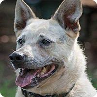 Adopt A Pet :: Rufus - Bradenton, FL