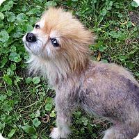 Adopt A Pet :: Hamilton - Clear Lake, IA