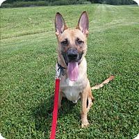 Adopt A Pet :: Hughie - Louisville, KY