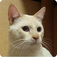 Adopt A Pet :: Aladdin - Mesa, AZ