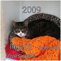 Adopt A Pet :: Irma - Smithtown, NY