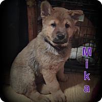 Adopt A Pet :: Mika - Denver, NC