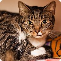 Adopt A Pet :: Wednesday - Brimfield, MA