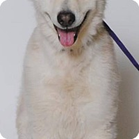 Adopt A Pet :: Freida - Las Vegas, NV
