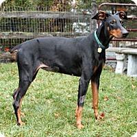 Adopt A Pet :: EVA - Greensboro, NC