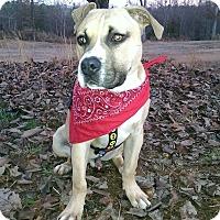 Adopt A Pet :: Sebastian - Albemarle, NC