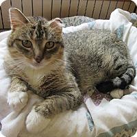 Adopt A Pet :: Sammie - Glenwood, MN