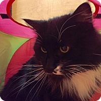 Adopt A Pet :: Mooch-Meet me at Petsmart! - Manchester, NH