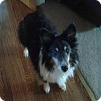 Adopt A Pet :: Colin - Mission, KS