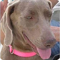 Adopt A Pet :: Lucy  **ADOPTED** - Eustis, FL