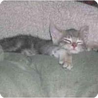Adopt A Pet :: Fiona - Davis, CA