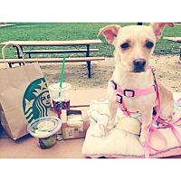 Adopt A Pet :: Lola - Dublin, CA