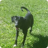 Adopt A Pet :: 1-7 Riley - Triadelphia, WV