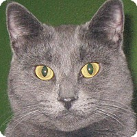 Adopt A Pet :: Sterling - Adoption Fee Paid! - Jefferson, WI