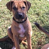 Adopt A Pet :: Buttercup - Daleville, AL