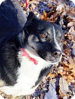 Husky/Shepherd (Unknown Type) Mix Dog for adoption in Frenchburg, Kentucky - Brandy