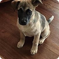Adopt A Pet :: Jillian - North Brunswick, NJ