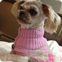 Adopt A Pet :: ZOE 2016 - Rochester, MN
