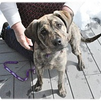 Adopt A Pet :: Oyster Creek - Broomfield, CO