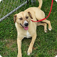 Adopt A Pet :: Jackie - Delaware, OH