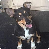 Adopt A Pet :: Norma - Rexford, NY