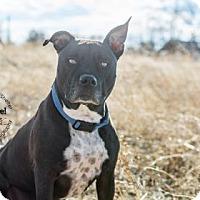 Adopt A Pet :: Stella - Cheyenne, WY