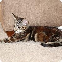 Adopt A Pet :: Chloe - Alamo, CA