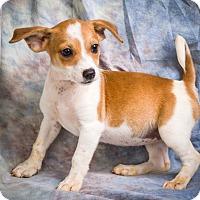 Adopt A Pet :: JOBY - Anna, IL
