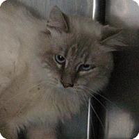 Adopt A Pet :: Arlen - Germantown, MD