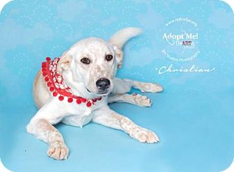 Golden Retriever/Labrador Retriever Mix Dog for adoption in Houston, Texas - Christian