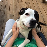 Adopt A Pet :: Georgia - Woodstock, GA