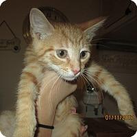 Adopt A Pet :: Mr. Meowgi - New Smyrna Beach, FL
