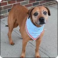 Adopt A Pet :: Benny - Oakland Gardens, NY
