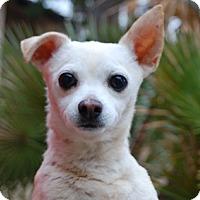 Adopt A Pet :: Titan - Las Vegas, NV