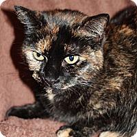 Adopt A Pet :: Kiwi - Laingsburg, MI