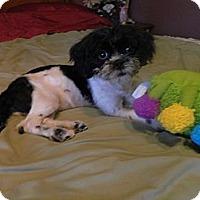 Adopt A Pet :: Piper - West Deptford, NJ