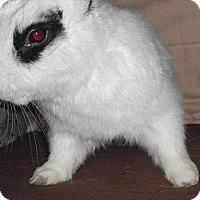 Adopt A Pet :: Thistle - Conshohocken, PA
