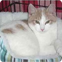 Adopt A Pet :: Charles (SO) - Little Falls, NJ