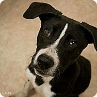 Adopt A Pet :: Abel - Avon, OH