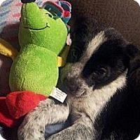 Adopt A Pet :: Rex - Westbank, BC