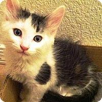 Adopt A Pet :: Wally - Gilbert, AZ