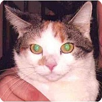 Adopt A Pet :: Molly - Plainville, MA