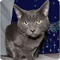 Adopt A Pet :: Cinder - Modesto, CA
