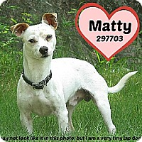 Adopt A Pet :: 297703 Matty - San Antonio, TX