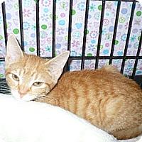 Adopt A Pet :: Arlo - Colmar, PA