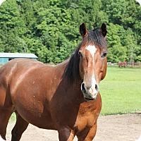 Adopt A Pet :: Rowdy - Saugerties, NY