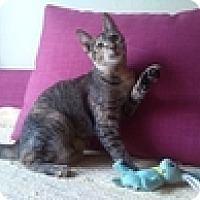 Adopt A Pet :: Olivia - Vancouver, BC