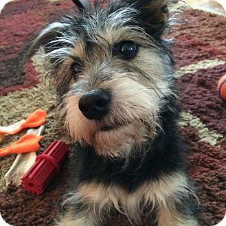 Adopt A Puppy Jersey City